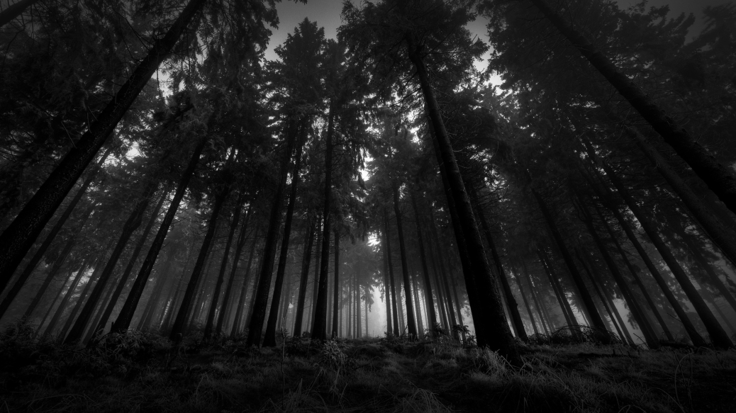 6920593-dark-forest-wallpaper